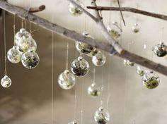 hanging terrariums at flora grubb