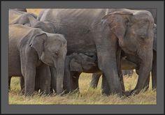 Wild Animals (Elephants are graceful, elegant and extremely...)