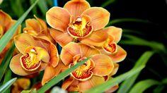 imagens de flores exticas