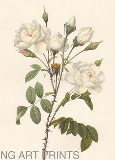 Vintage Rose Print Large Oversized Botanical Wall by NGArtPrints