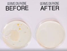 Here's what grew on the petri dishes after 5 days: | Here's How To Actually Clean Your Disgusting Phone