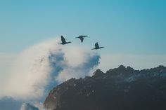 https://flic.kr/p/C4f64N | Cormorant Formation | Perfect timing with the cormorant flyby and splash!  Happy Sunday Folks!