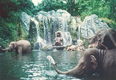 that elephant under the waterfall is the cutest thing ever!
