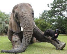 elefante-cachorro-amizade5