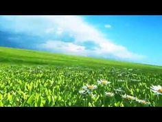 http://pixelboom.it/shop/green-screen/flowery-meadow-daisies/ Green Screen Flowery Meadow Daisies - Footage PixelBoom