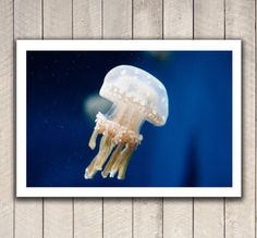 Fine art photography, ocean photography, ocean art, nature photography, jellyfish underwater blue marine art wall decor photography print