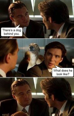There's a dog behind you....