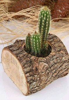Such fun planter ideas. Bonus, cacti can be forgotten and thrive! Find more garden DIY at www.centsiblewife.com