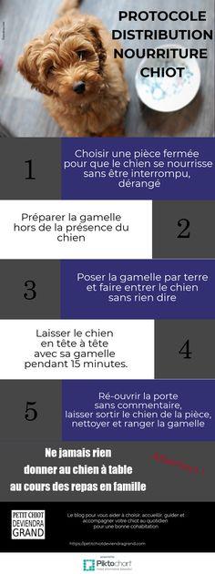 Protocole de distribution de nourriture du chiot à partir de 2 mois en 5 étapes