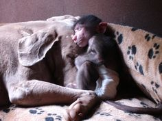 dog and baby baboon - Google Search