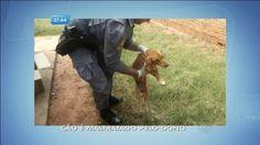 Cachorro morre após ser maltratado pelo dono em Bauru (SP) - Fotos - R7 SP no Ar