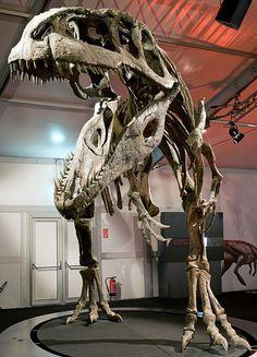 It rivaled T. rex in size. Dinosaur Skeleton, Dinosaur Bones, Dinosaur Art, Dinosaur Fossils, Animal Fact File, Animal Facts, Prehistoric Dinosaurs, Prehistoric Creatures, Jurassic World