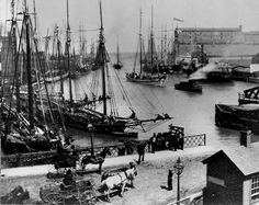 A harbor with many schooners. Date and photographer unknown. iChi-67477.