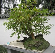 using bamboo plants in the garden - Google Search