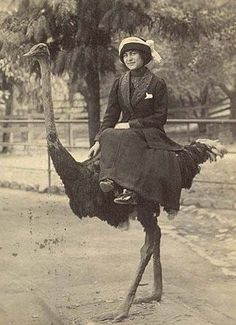 woman riding side-saddle on an austrich