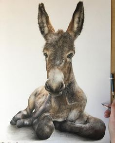 By Bethany Vere. The post Colored Pencils Realistic Animal Drawings appeared first on Animal Bigram Ideen. Realistic Animal Drawings, Horse Drawings, Pencil Drawings, Animals And Pets, Baby Animals, Cute Animals, Draw Animals, Donkey Drawing, Art Inspiration Drawing