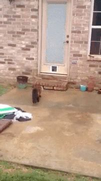 Cat reacts to newly installed cat door #funny #lol Please RePin!