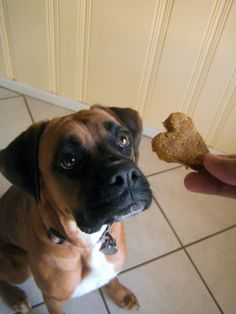 pumpkin and peanut butter biscuits for doggies....made these and the pups TOTALLY LOVED THEM!