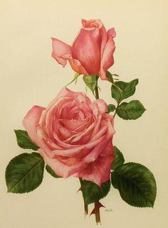 Flower Art Print 1960s Rendezvous Pink Rose by earlybirdsale, $8.00