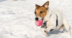 Hypothermia: Keeping your dog safe in the cold.  -  winter safety.     lj