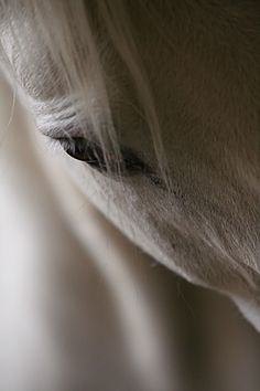 #horse #white #black #eye