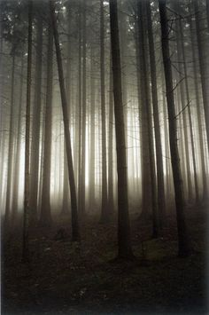 Jitka Hanzlová, Appearing Light, 2004. From the series 'Forest'