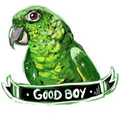 Training Your Pet Parrot Parrot Cartoon, Parrot Pet, Parrot Toys, Budgies, Parrots, Pet Cage, Exotic Birds, Cockatoo, Parakeet