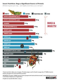 Why all the buzz on eating bugs? Protein