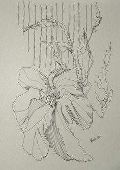 Tusche Feder Zeichnung schwarz Blume Lilie schwarz Natur Hajewski
