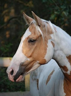 Palomino Paint horse. I love horses, but they scare me so much. So big and powerful.