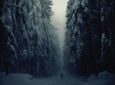 Snow Forest in Czech Republic   photography by Jan Machata