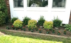 Foundation Planting at the Front of the House - front yard ideas no grass Boxwood Landscaping, Landscaping Around House, Outdoor Landscaping, Front Yard Landscaping, Southern Landscaping, Landscape Design Plans, House Landscape, Landscape Edging, Landscape Art