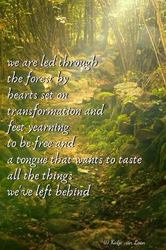 we are led through//the forest by//hearts set on//transformation and//feet yearning//to be free and//a tongue that wants to taste//all the things//we've left behind Apple Books, Yearning, Pretty Pictures, How To Become, Poems, Hearts, Led, Cute Pics, Poetry