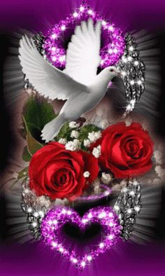 Dove Images, Dove Pictures, Love Heart Images, Love You Images, Beautiful Flowers Wallpapers, Beautiful Rose Flowers, Beautiful Nature Wallpaper, Beautiful Love Pictures, Beautiful Gif
