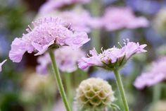 RHS advice & tips on garden & indoor plants   Plant finder & selector / RHS Gardening