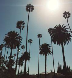 Eu AMO essas ruas cheias de coqueiros! Los Angeles, California.