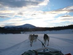 Whitehorse, Y.T., Canada