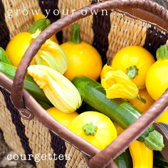 Grown Your Own Courgettes