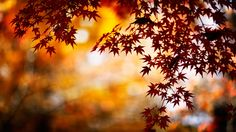 free desktop wallpaper downloads autumn leaves  (Dunstan Nail 2560 x 1440)