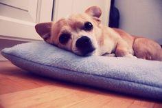 Cutey, looks like my dog!