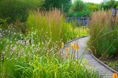 wetlands garden - Google Search