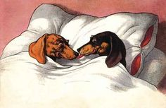 ha! this is where all doxies think they should be!
