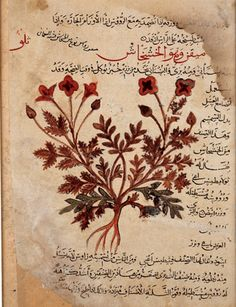 The poppy (al-khashkhâsh)