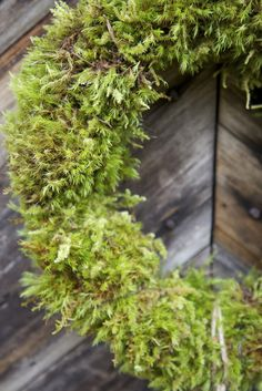 """Sometimes the beauty lies in the simplicity. Like this:: <span style=""""text-decoration: underline""""><a href=""""http://ljo-s.blogspot.nl/2011/11/er-den-virkelig-var.html"""" target=""""_blank""""><strong>Moss Wreath</strong></a><strong> </strong></span>"""