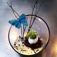 Spring Terrariums at Oddyssea