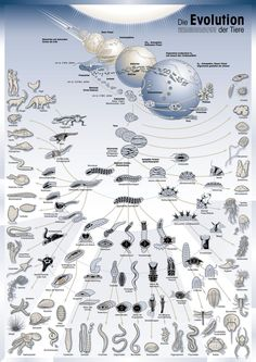 Evolution - this is an awesome summary... Like branches of a tree...