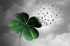 Losing luck or spreading good fortune concept as a four leaf clover transforming into flying birds as a surreal metaphor for financial and life success or decay with illustration elements. Leaf Illustration, Good Fortune, High Quality Images, Karma, Surrealism, Plant Leaves, Royalty Free Stock Photos, Concept, Pictures