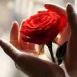Postul de miercuri si vineri | La Taifas Alba, Rose, Flowers, Pink, Roses, Royal Icing Flowers, Flower, Florals, Bloemen