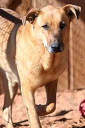 Sweet adoptable female, see website for details