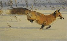 Bob Kuhn (1920–2007), Like the Down of a Thistle - Red Fox, acrylic on board, 17 x 28 in, JHAA 2009 Sold: $299,000